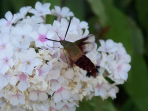 bug with flower